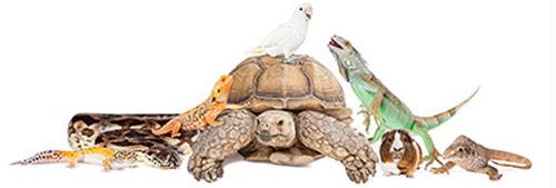 https://www.siccallatorvos.hu/uploads/images/group_of_animals_for_mobile.jpg